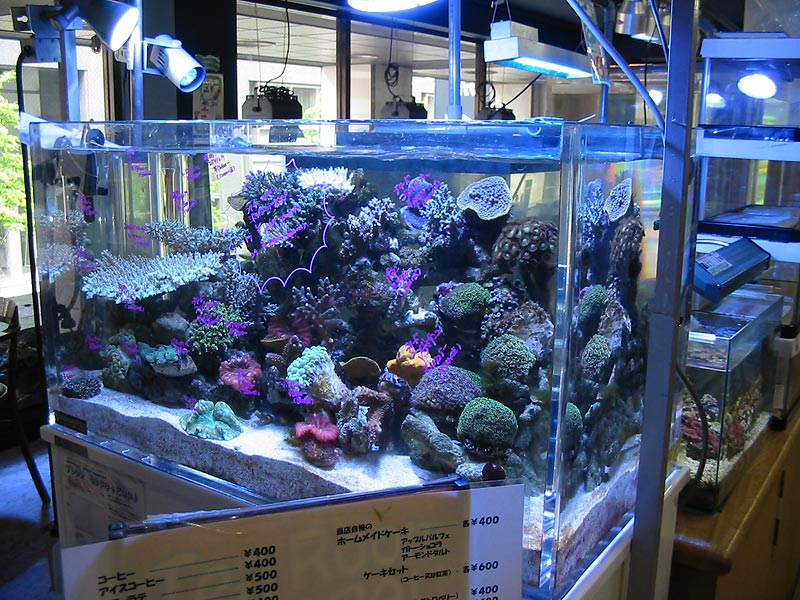 My random visit to a tokyo fish store reef central for Online fish stores