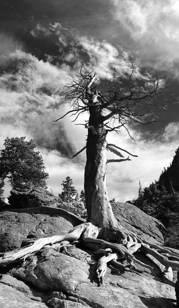 tree-pano