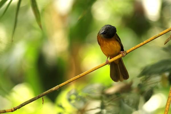 curious-bird
