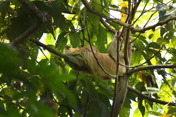 sloth-bro