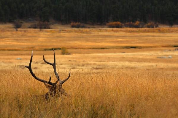 elk-morraine